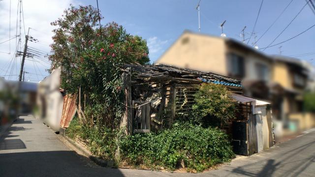 樹木が家を突き破り今に倒壊しそうな建物